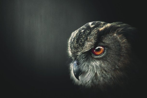An_owl__s_wisdom_by_SaviourMachine